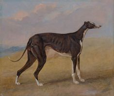 Turk, a greyhound, the property of George Lane Fox by George Garrard 1822.