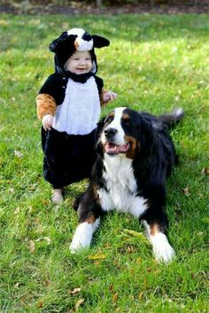 So cute Kids Dog Costume, Cute Dog Costumes, Baby Animals, Animals And Pets, Cute Animals, Animals Beautiful, Bernese Mountain Dogs, Mountain Dog Breeds, Puppies In Costumes