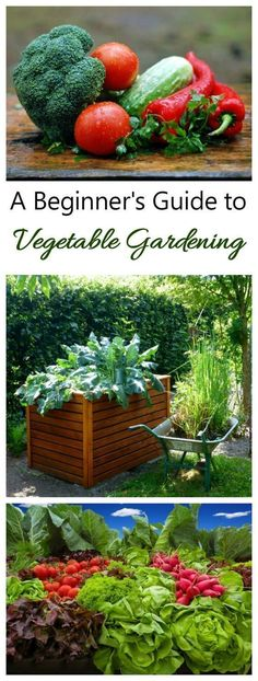 Growing your own vegetables is one of the highlights of summer gardening. There is nothing quite like the taste and freshness of home grown veggies! My vegetable gardening guide will lead you through the process,, from starting seeds to growing in containers to the actual harvest. #summervegetablegardening #vegetableseedsveggies