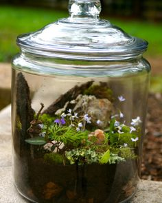 I am now homeschooling (it's a long story), so I am constantly on the search for new learning ideas. I decided to help Monster build a terrarium using only materials gathered from our backyard (except for the jar).