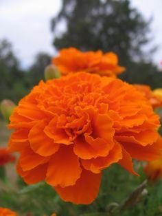 I like Orange things by BlooMoonie.deviantart.com on @deviantART