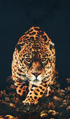 Tier Wallpaper, Pop Art Wallpaper, Leopard Wallpaper, Animal Wallpaper, Beautiful Cats, Animals Beautiful, Leopard Tapete, Animals And Pets, Cute Animals