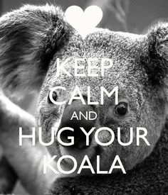 keep-calm-and-hug-your-koala.png 600700 pixels - Koala Funny - Funny Koala meme - - keep-calm-and-hug-your-koala.png 600700 pixels The post keep-calm-and-hug-your-koala.png 600700 pixels appeared first on Gag Dad. Cute Koala Bear, Baby Koala, Koala Bears, Koala Meme, Funny Koala, Animals Beautiful, Cute Animals, Funny Animals, Wild Animals