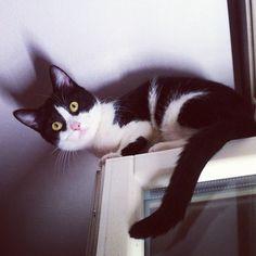 My #cat on a window #catsofinstagram #kitten - @nesuss