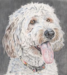Awwwh what a lovely animal portrait by willow in pastel