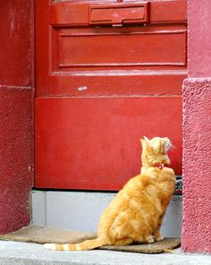 Cat from Rue Cremieux in Paris, France