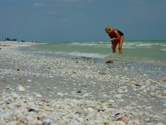 sanibel island, fl -- one of the best shelling beaches on the east coast