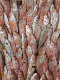 Barbun fish.