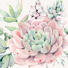 'Pretty Succulents Pink and Green Desert Succulent Illustration' Tapestry by DesertDecor Succulents Wallpaper, Succulents Drawing, Watercolor Succulents, Cactus Rose, Pink Succulent, Rosa Pink, Green Theme, Watercolor Paintings, Flower Paintings