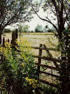 Romania, Countryside, Vineyard, Seasons, Explore, Plants, Summer, Photography, Outdoor