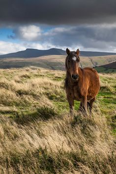 A Welsh mountain pony on the Brecon Beacons S Wales by Colin Molyneux . I just really want to visit Wales All The Pretty Horses, Beautiful Horses, Animals Beautiful, Farm Animals, Cute Animals, Welsh Pony, Brecon Beacons, Horse Pictures, Horse Photos