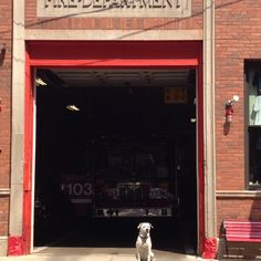 Chicago Engine 103 Fire Department's dog Freckles Chicago Fire Department, Firefighter Pictures, Good Job, Freckles, Doggies, Engine, Little Puppies, Pet Dogs, Motor Engine