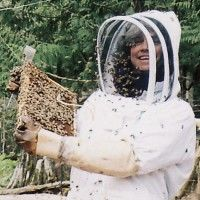 Essential Oils For Honeybees at Brookfield Farm