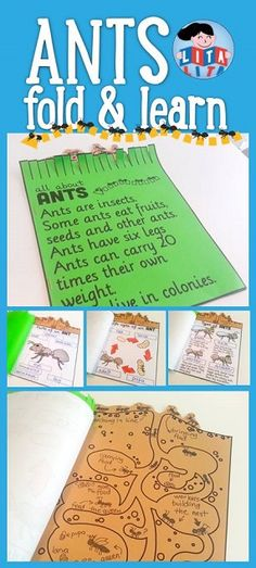 Ants mini book: label, life cycle, types, facts and draw your own nest. English-Spanish