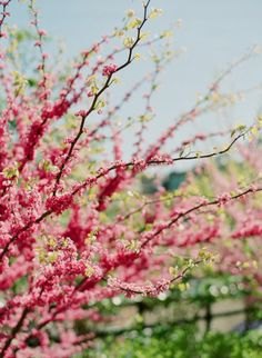 Spring [KT Crabb]
