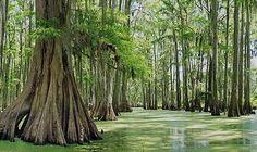 Neches Wild And Scenic River