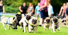 Die Shows und Wettbewerbe der Heimtiermesse Animal versprechen jede Menge Action…