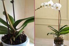 Types Of Lilies, Thy Art Is Murder, Garden Types, Growing Plants, Fruit Trees, Herbal Medicine, Orchids, Herbalism, Succulents