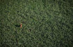 Running free by EmanueleBissoli. @go4fotos