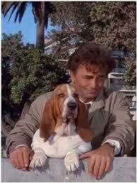 Peter Falk with Fred his dog. Kung Fu, Columbo Tv Series, Columbo Peter Falk, Goofy Dog, Good Looking Actors, American Exceptionalism, Famous Dogs, Dogs Of The World, The Good Old Days