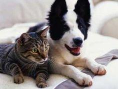 Otite: cuidados que você precisa ter para evitar a doença em cães e gatos