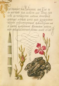 Reed Grass, French Rose, Toad, and Gillyflower. Watercolour, gold and silver paint, and ink on parchment by Joris Hoefnagel (Flemish / Hungarian, 1542 - 1600) and Georg Bocskay (Hungarian, died 1575). Image and text courtesy The Getty.