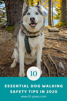 10 Essential Dog Walking Safety Tips in 2020. Dressing up for a walk with your pet dog might seems like a piece of cake– all you need is a pet, leash and collar, right?– yet there are a few more essentials dog walking tips that can help make your walks safe, comfy and also productive. Below are ten points you need to take your leash walks to the next level. #dog #walking #safety #tips #dogwalking #dogsafety #dogtravel #doghike #pet #pets #cat #cats #pettravel Pet Travel Carrier, Dog Travel, Places In California, California Travel, Dog Safety, Safety Tips, Travel Supplies, 10 Essentials, Hiking Dogs