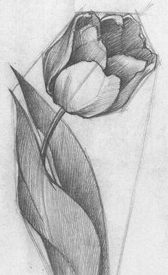 Рисуем цветы карандашом поэтапно