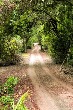 Dirt road through the coastal forest to the beach (Mtunzini, South Africa) by Elnes Smit cr.c.