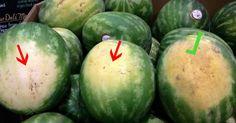 Ako si správne vybrať melón? Tieto ZADARMO triky máme priamo od farmára, ktorý ich pestuje | Chillin.sk