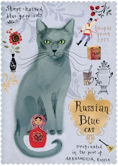 Russian blue cat from Postallove