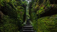 saxon switzerland national park | Saxon Switzerland National Park, Germany (© Andreas Vogel/500px)(Bing ...