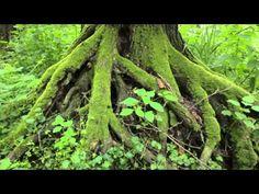 Fertő-Hanság Nemzeti Park - YouTube National Parks, World, Youtube, Plants, The World, Plant, Youtubers, Youtube Movies, Planets