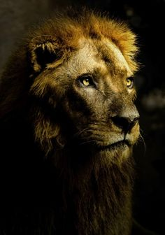 Einer aus der Löwengrube