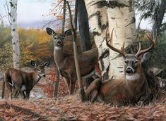 © Kevin Daniel About the ArtistWhen Kevin Daniel began dabbling in paints and completing portraits as a young man in the early he had no thought that he was nurturing the beginnings of a profession that would last a lifetime. Whitetail Hunting, Deer Mounts, Hunts, Animal Paintings, Natural Wonders, Real People, Renaissance, Fine Art Prints, Wolf