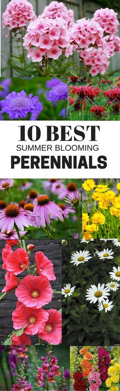 The 10 best summer blooming perennials. Easy to grow!