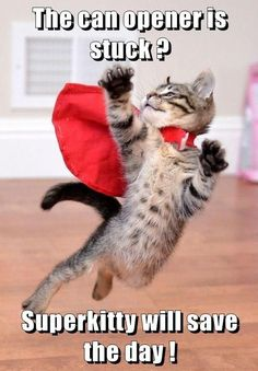 Super #Kitten To The Rescue! http://ibeebz.com