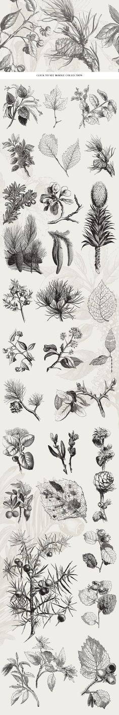 29 Branches, Twigs, & Leaves No.2 by Vector Hut on @creativemarket