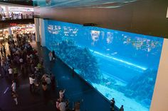 Dubai Mall Aquarium – Dubai, UAE I was here!