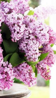 get a lilac bush since it's drought tolerant! We had so many lilac bushes in our yard growing up- they smell amazing. Lilac Flowers, Fresh Flowers, Spring Flowers, Beautiful Flowers, Lilac Tree, Red Roses, Bouquet Champetre, Lilac Bushes, Beautiful Gardens