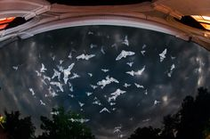 bat - somogyfajsz, hungary photo made by norbert erdei Hungary, Airplane View, Neon, Clouds, Urban, World, Animals, Outdoor, Outdoors