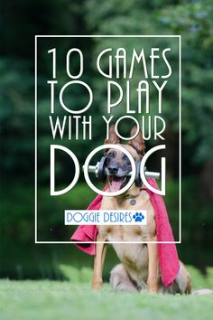 Wondering how to bond with your dog? Here's 10 games to play with your dog! >> http://doggiedesires.com/10-games-to-play-with-your-dog/