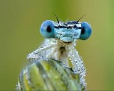 Damselflies, Search, Google, Searching