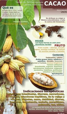 Propiedades y beneficios del Cacao. #vegano #vegetariano
