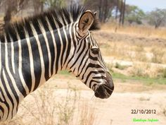 www.antelopesafaris.com Tour Guide, Safari, Tours, Animals, Animais, Animales, Animaux, Animal