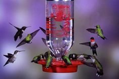 Hummingbird Nectar Recipe 1 part parts water Boil the water first, then measure and add sugar, at the rate of cup of sugar to 1 cup of water. Let cool and store excess in refrigerator until ready to use. Do not add food coloring, honey Homemade Hummingbird Nectar, Hummingbird Garden, Hummingbird Mixture, Hummingbird Flowers, Hummingbird Tattoo, Nectar Recipe, Audubon Society, Humming Bird Feeders, Wild Birds
