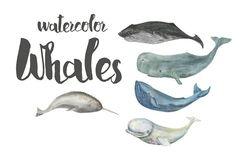 Watercolor whales by ramika on @creativemarket
