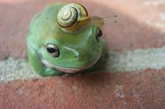 Does this snail make my head look big?