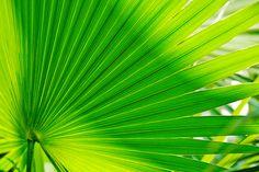 Lang lang ist es her - Fotoseminar Pflanzen Kreativ