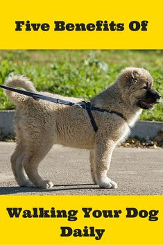 Do you walk your dog